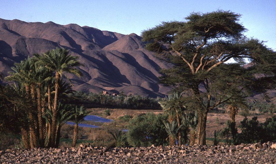 Camel trek sahara morocco