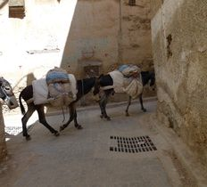 Guided city tour of Fes medina in Morocco