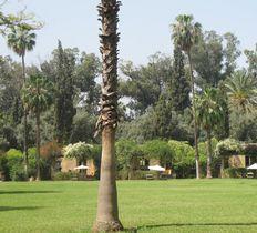 La gazelle d'Or hotel Taroudant Morocco
