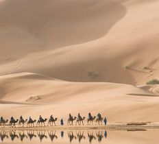 Camel trek and Picnic in the Sahara